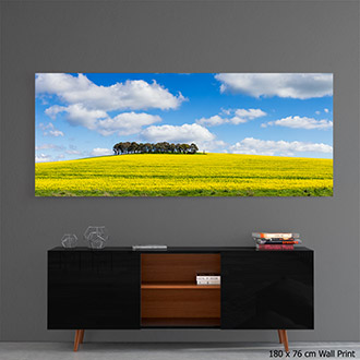 wall mounted acrylic fine art print of canola crop under sky sky and clouds